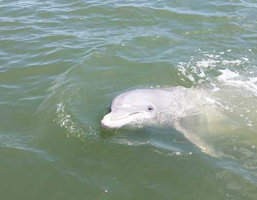 Sundial Charters Dolphin Tours