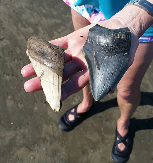 Sundial Charters Fossil Hunting